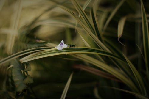 Selective Focus Photo of Black Ant on Green Leafed Plant