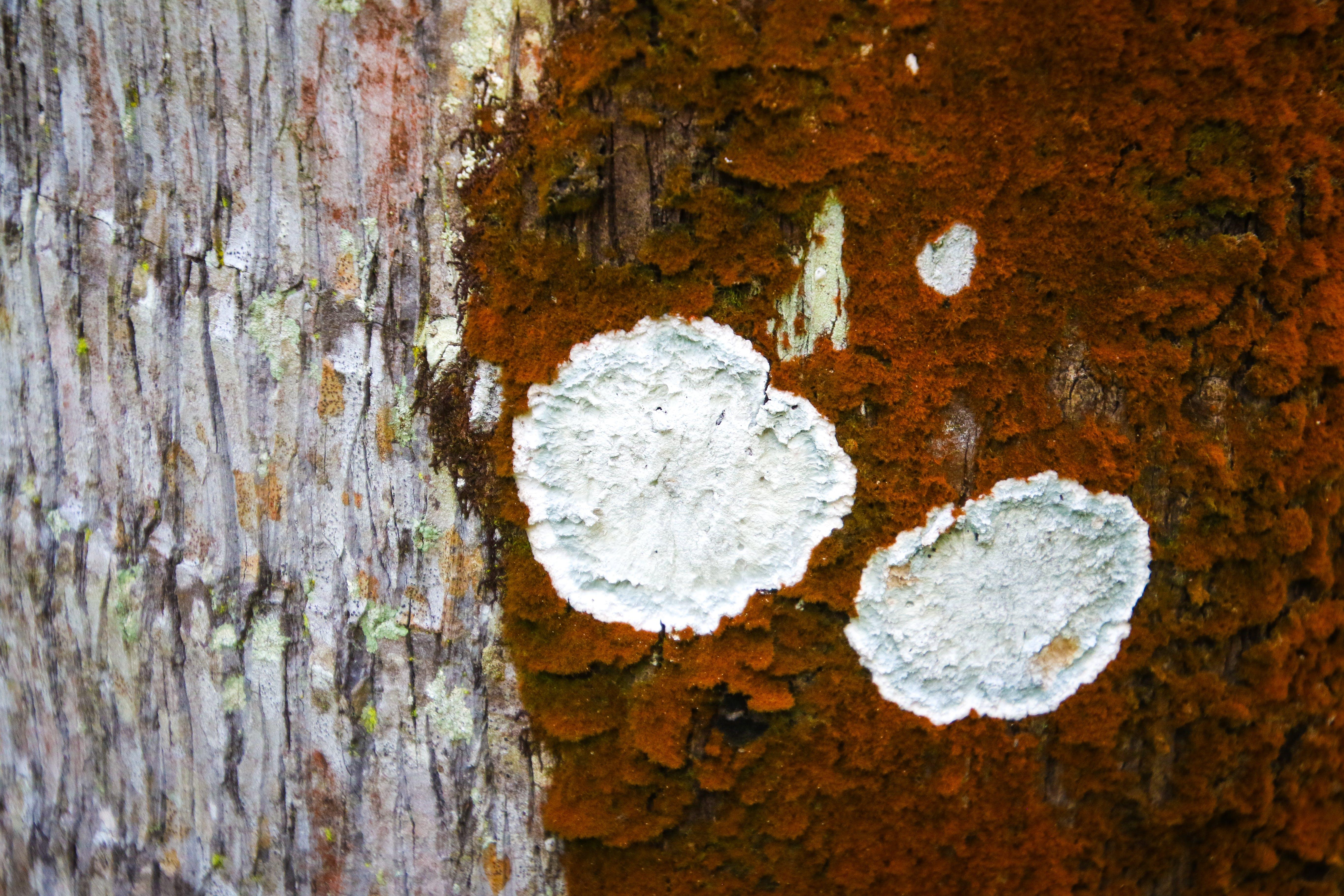 Free stock photo of nature, texture, garden, moss