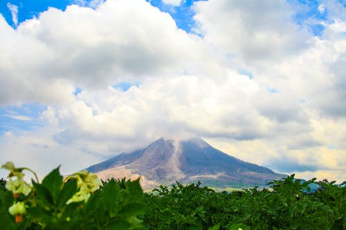 Gratis lagerfoto af bjerg, natur, naturfotografering, naturliv