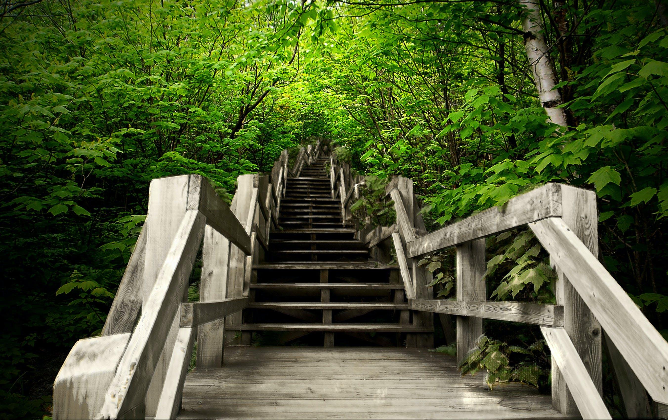 Free stock photo of nature, stairway