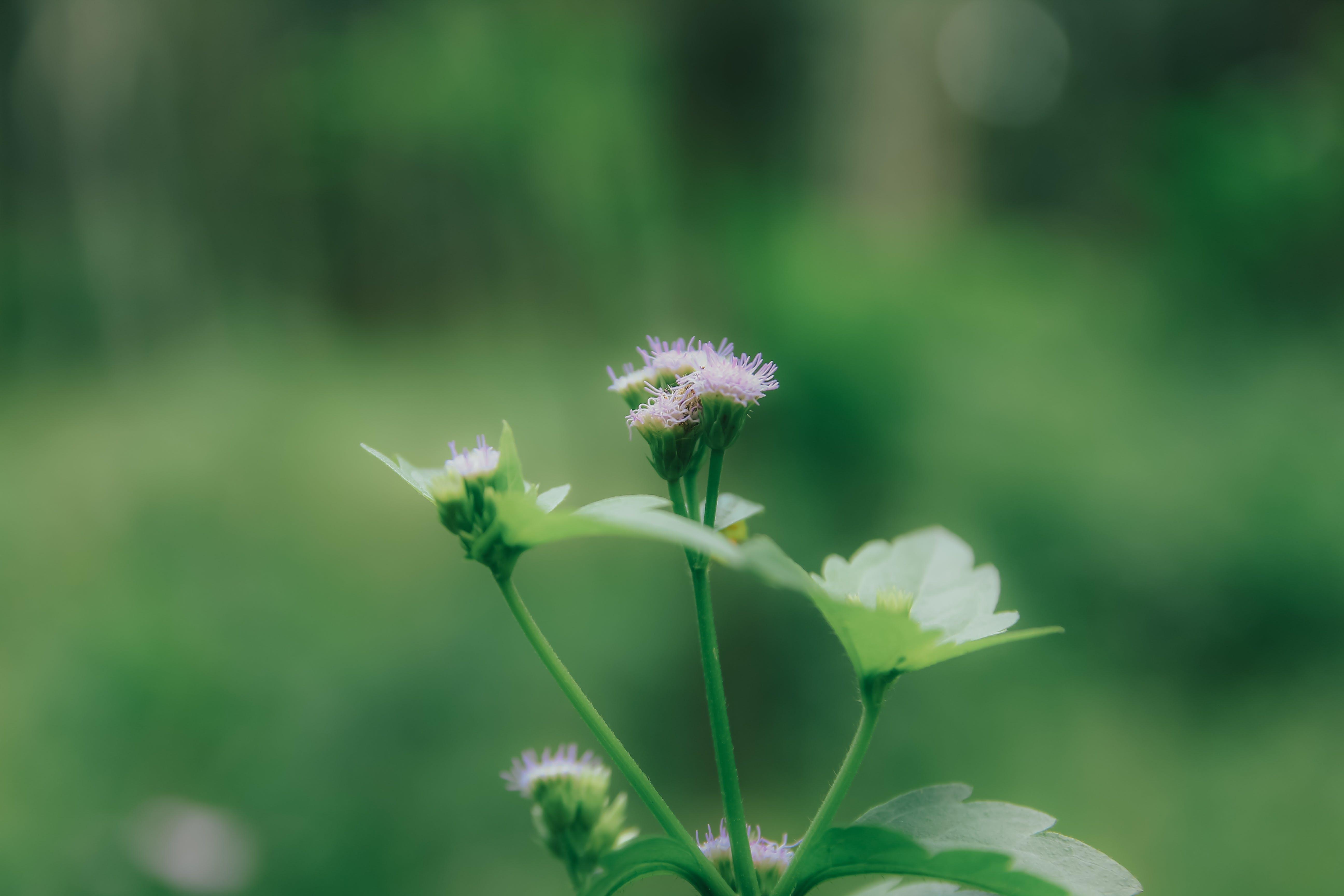 Free stock photo of nature, grass, blur, green