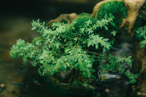 Foto profissional grátis de brilhante, cores, ecológico, fundo borrado