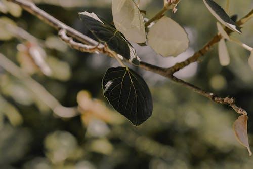 Darmowe zdjęcie z galerii z ciemnozielony, gałąź, listowie, wzrost