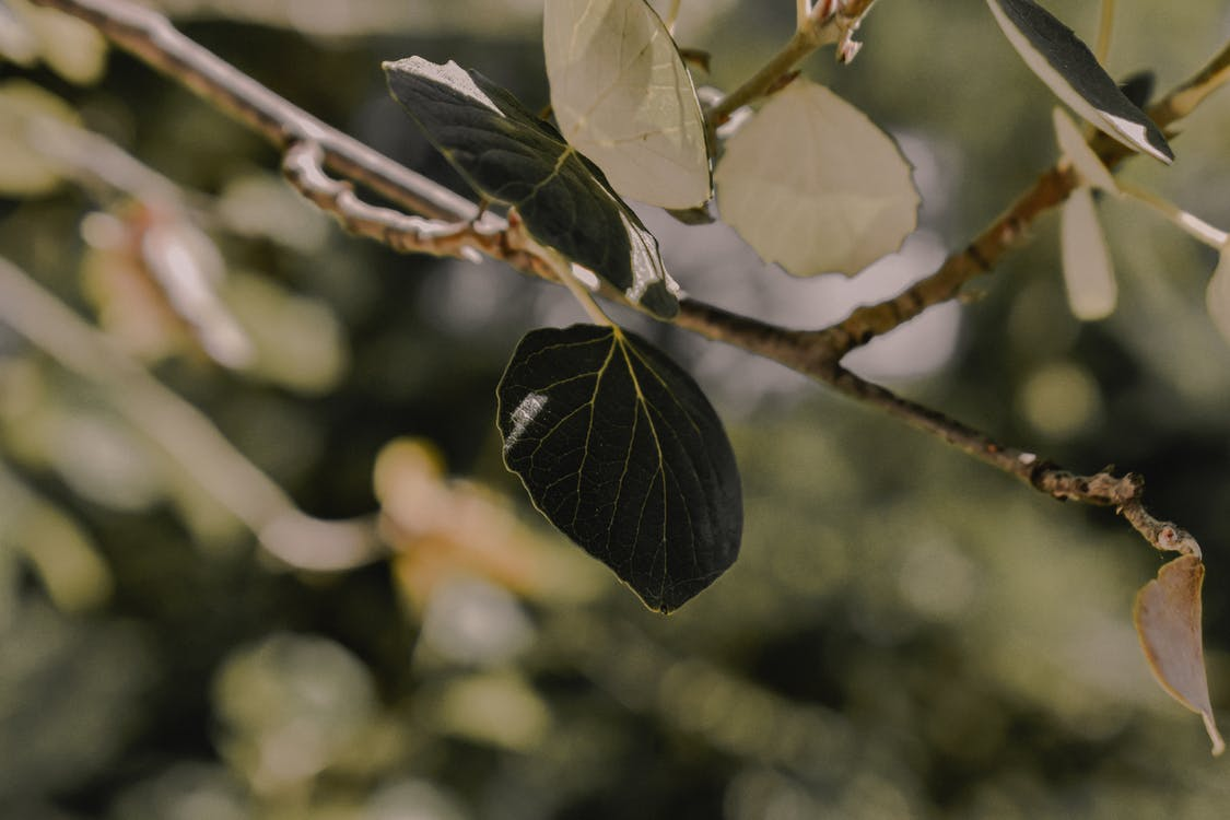Photo Green Leafed Branch
