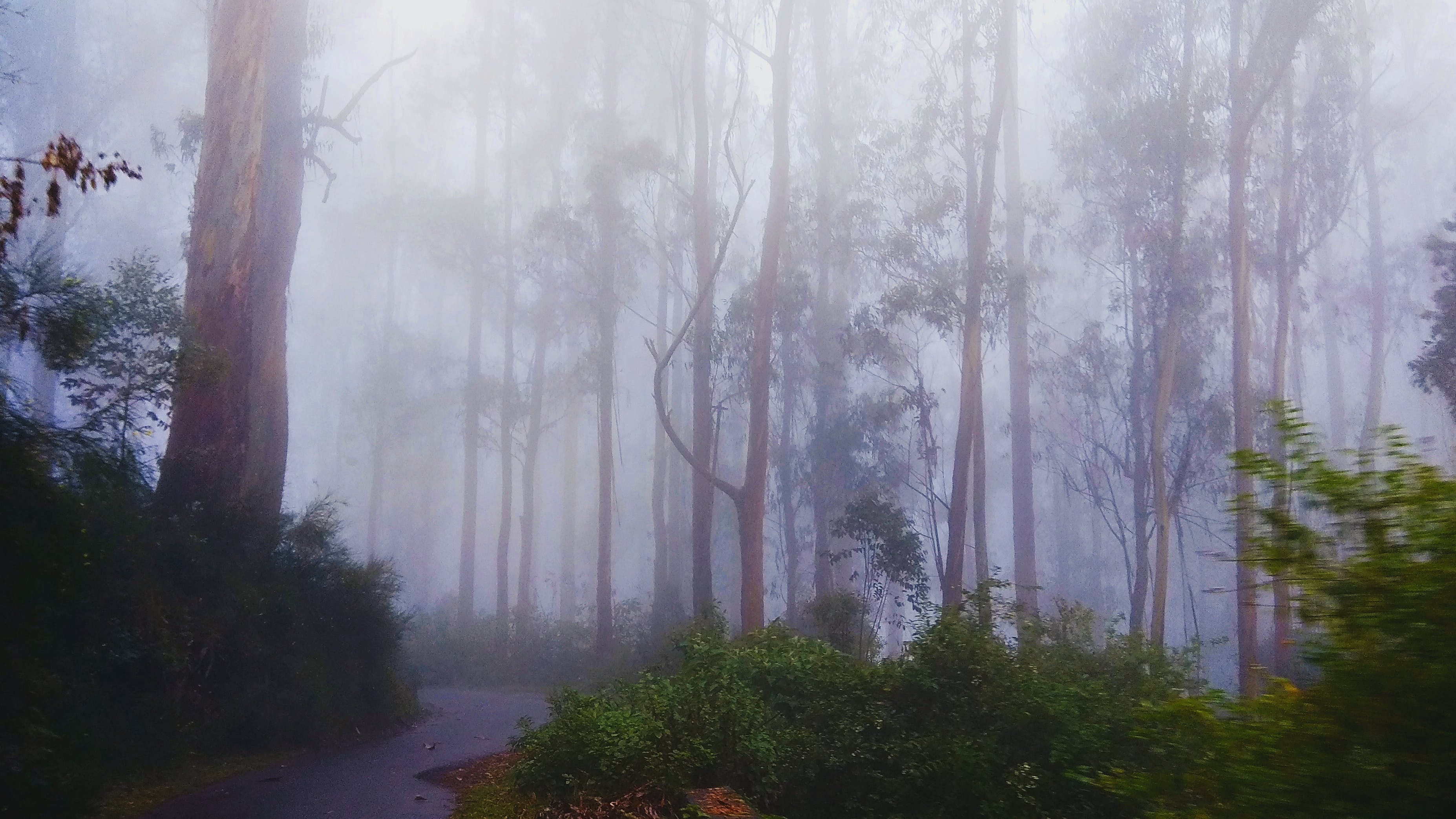 Free stock photo of beautiful, country, fog, hill station