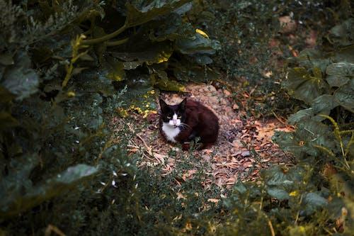 Free stock photo of black, cat, cat eye