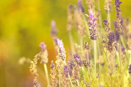 Gratis stockfoto met Bos bloemen, mooie bloemen, natuurleven