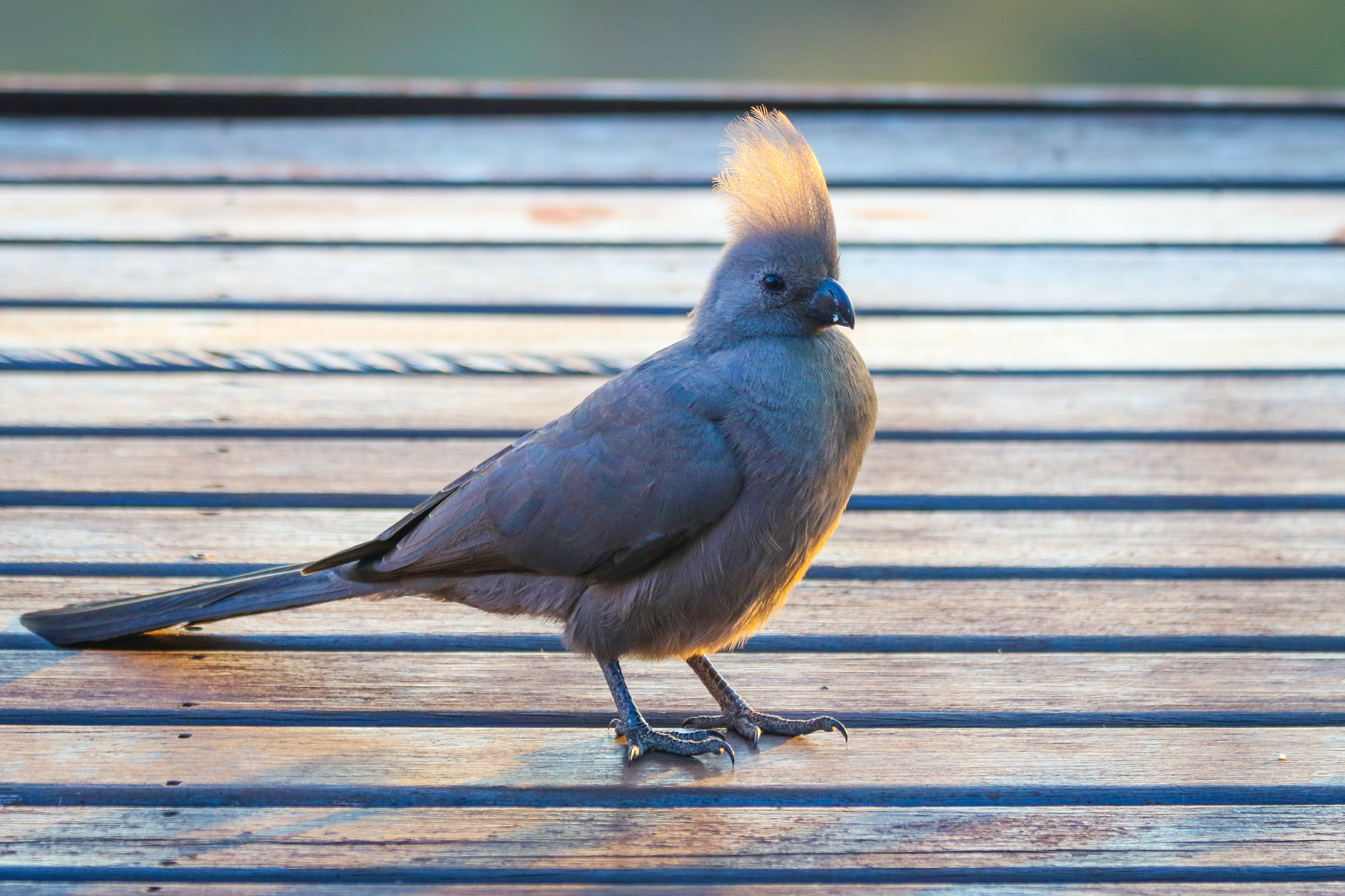 Gray Bird on Brown Wooden Surface