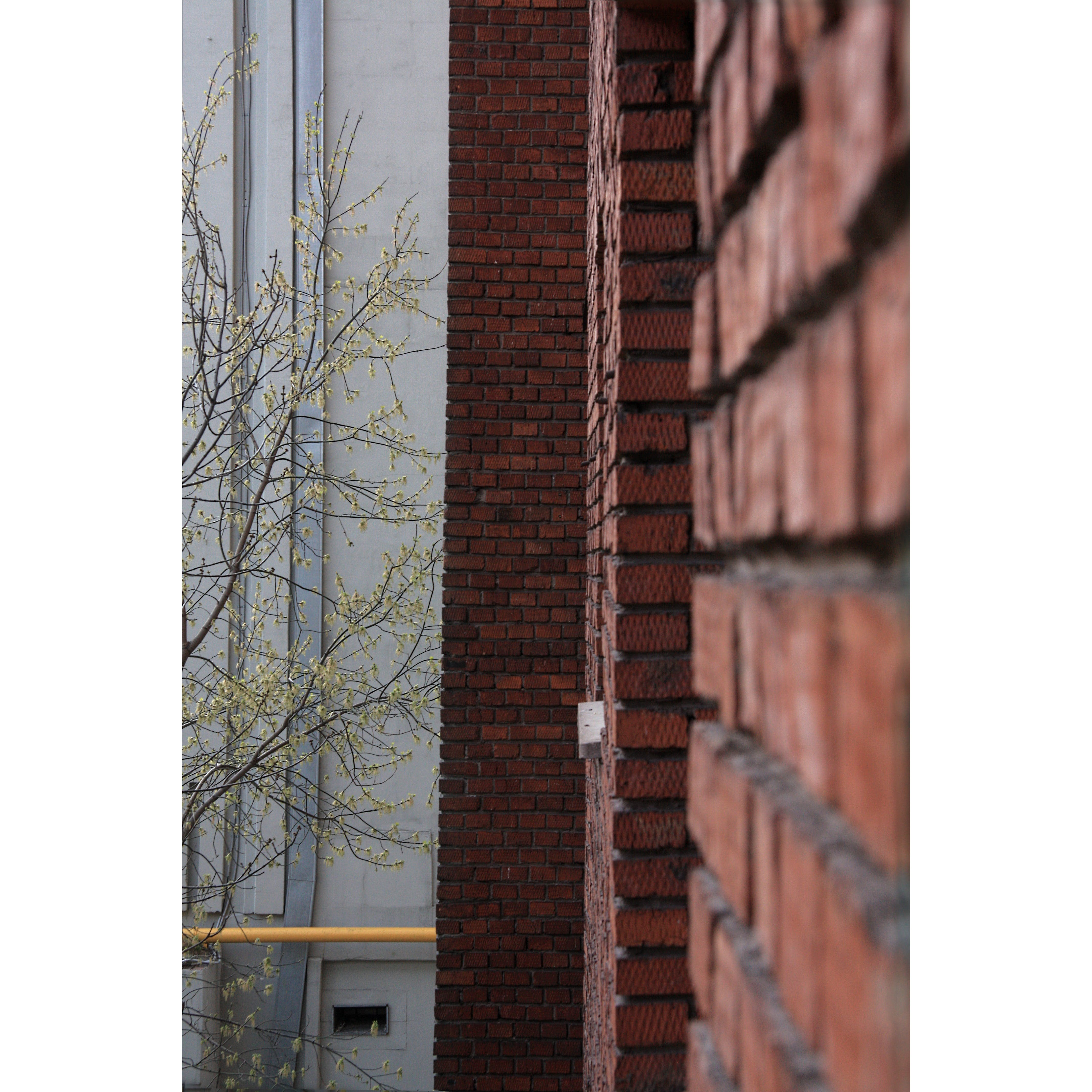 Free stock photo of android wallpaper, brick wall, brick walls, city