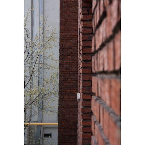 Foto stok gratis alam, dinding bata, kota, Wallpaper HD