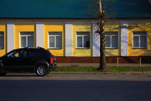 คลังภาพถ่ายฟรี ของ ต้นไม้ตาย, มีสีสัน, รถ, รถสีดำ