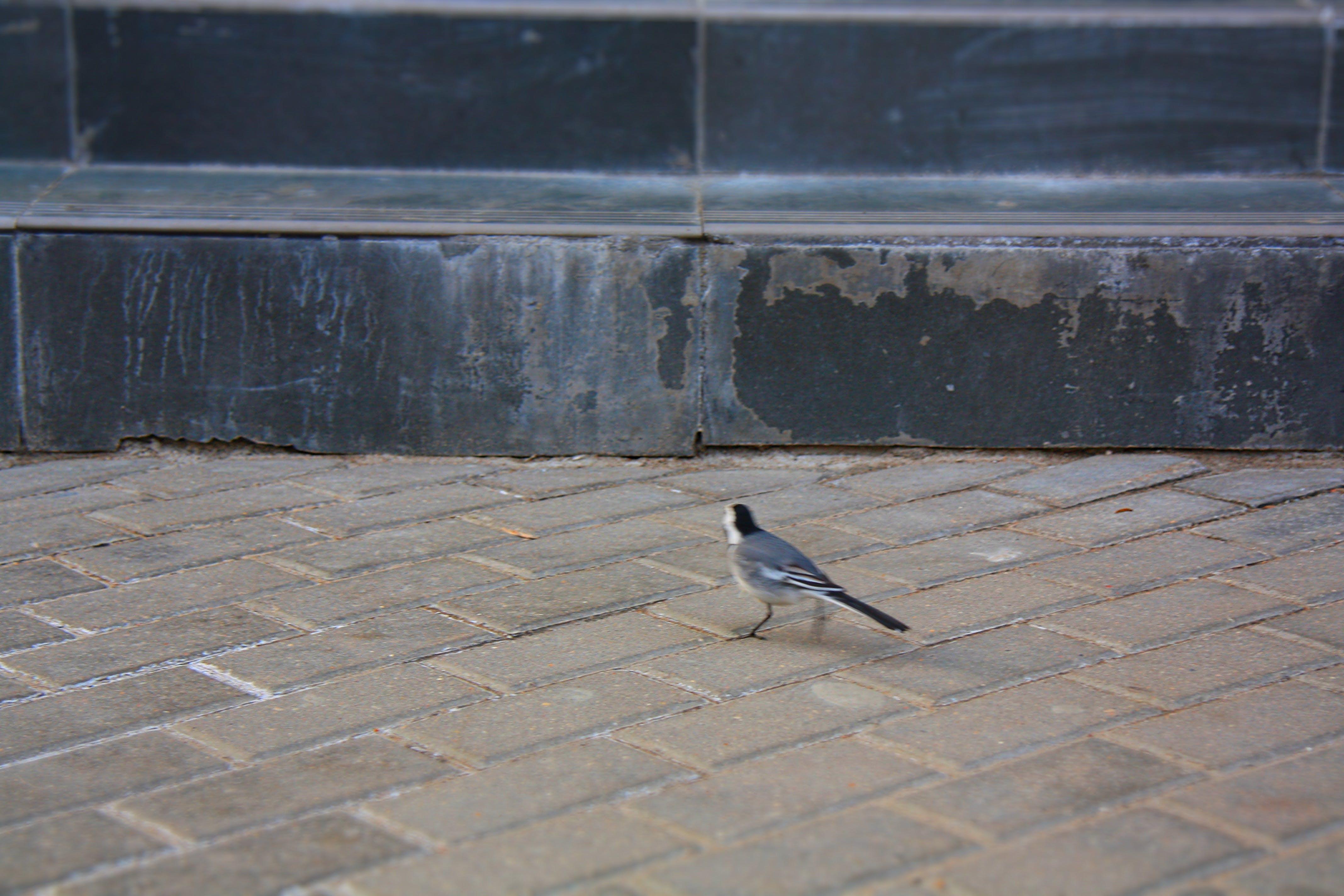 Free stock photo of city, bird, animal, grey