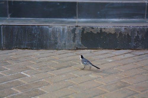 คลังภาพถ่ายฟรี ของ นกตัวเล็ก, วอลล์เปเปอร์ HD, สัตว์, สัตว์เล็ก