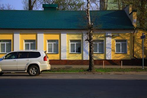 Gratis lagerfoto af bil, by, dødt træ, farverig