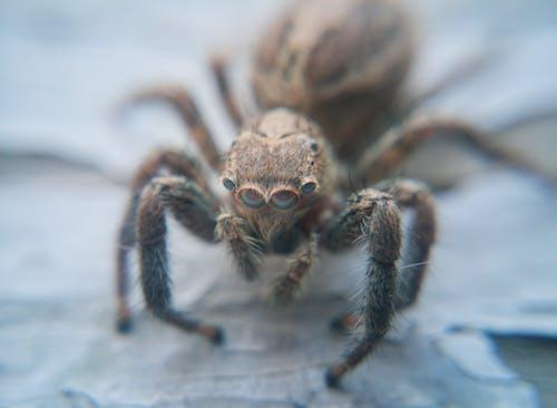 Gratis stockfoto met gedetailleerd, insecten, kevers, macro