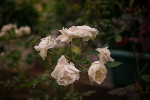 Free stock photo of cool, flower, macro, nature