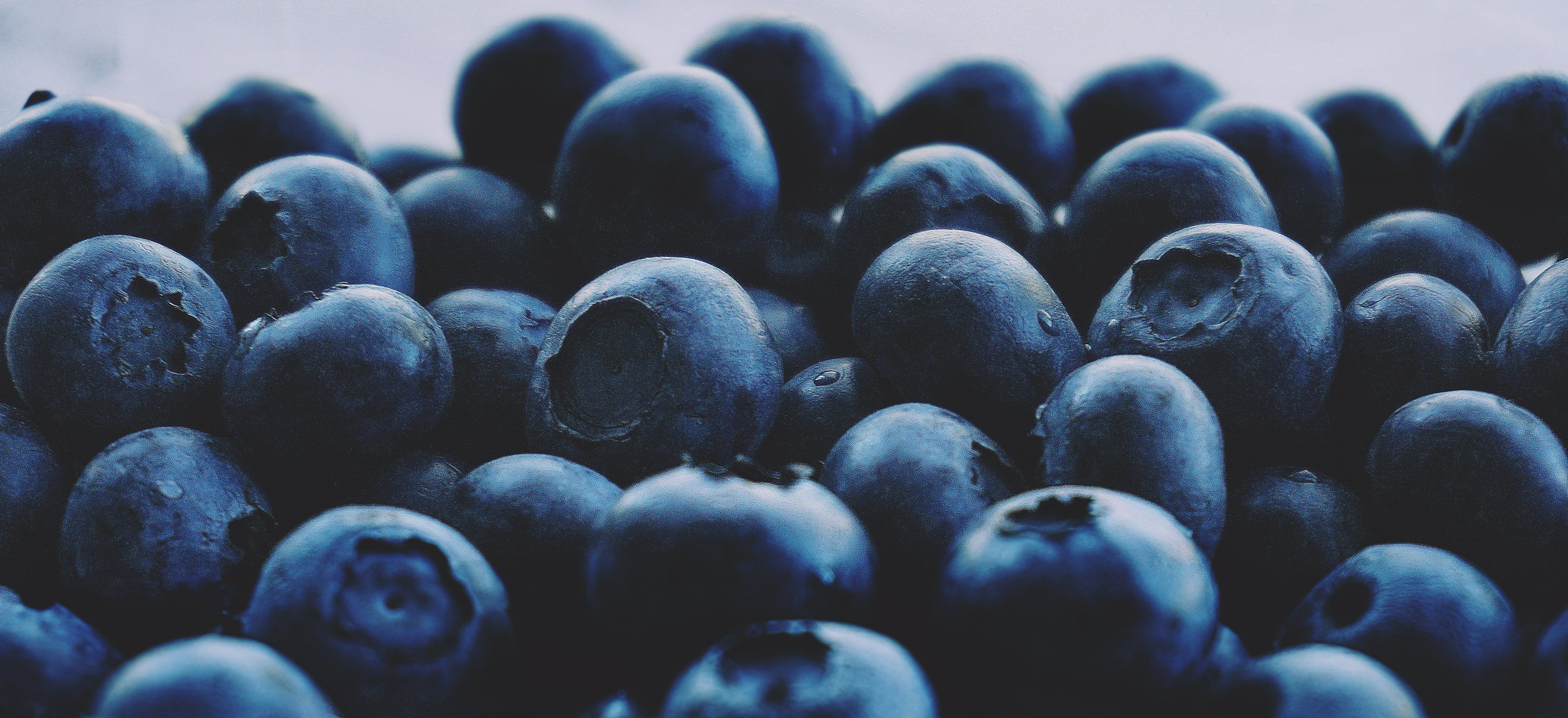 berries, blueberries, close-up