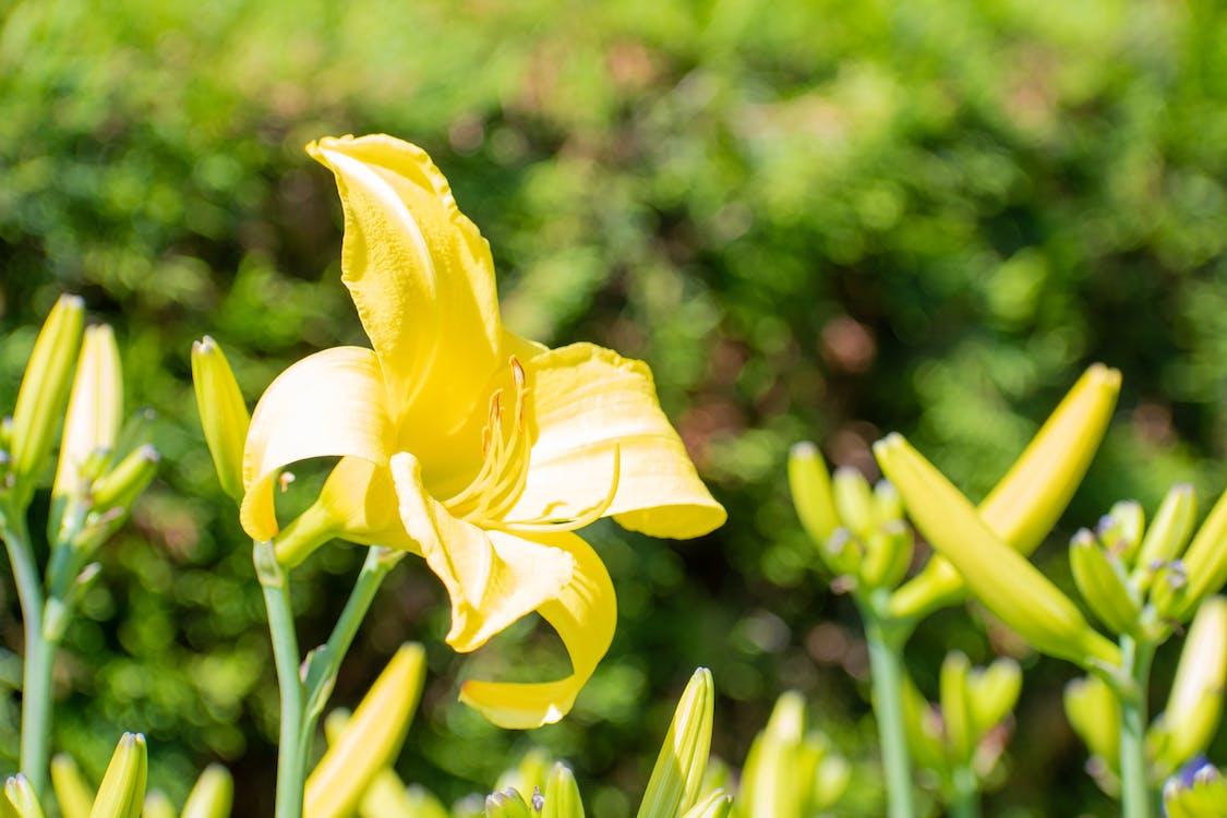 Ilmainen kuvapankkikuva tunnisteilla keltainen ja vihreä, keltaiset kukat, kukat
