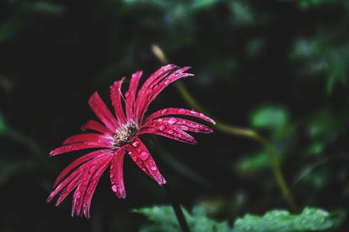 Close-Up Photography of Flower With Droplets