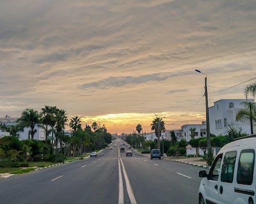 Photos gratuites de arbres, ciel nuageux, coucher de soleil, lever de soleil