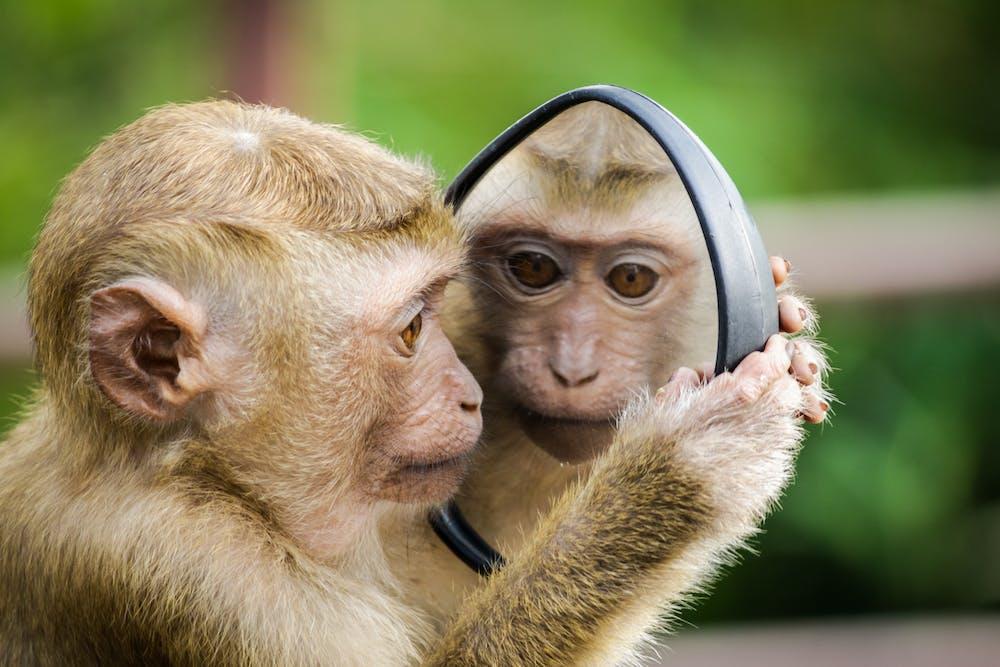 बंदर  को मिली सज़ा