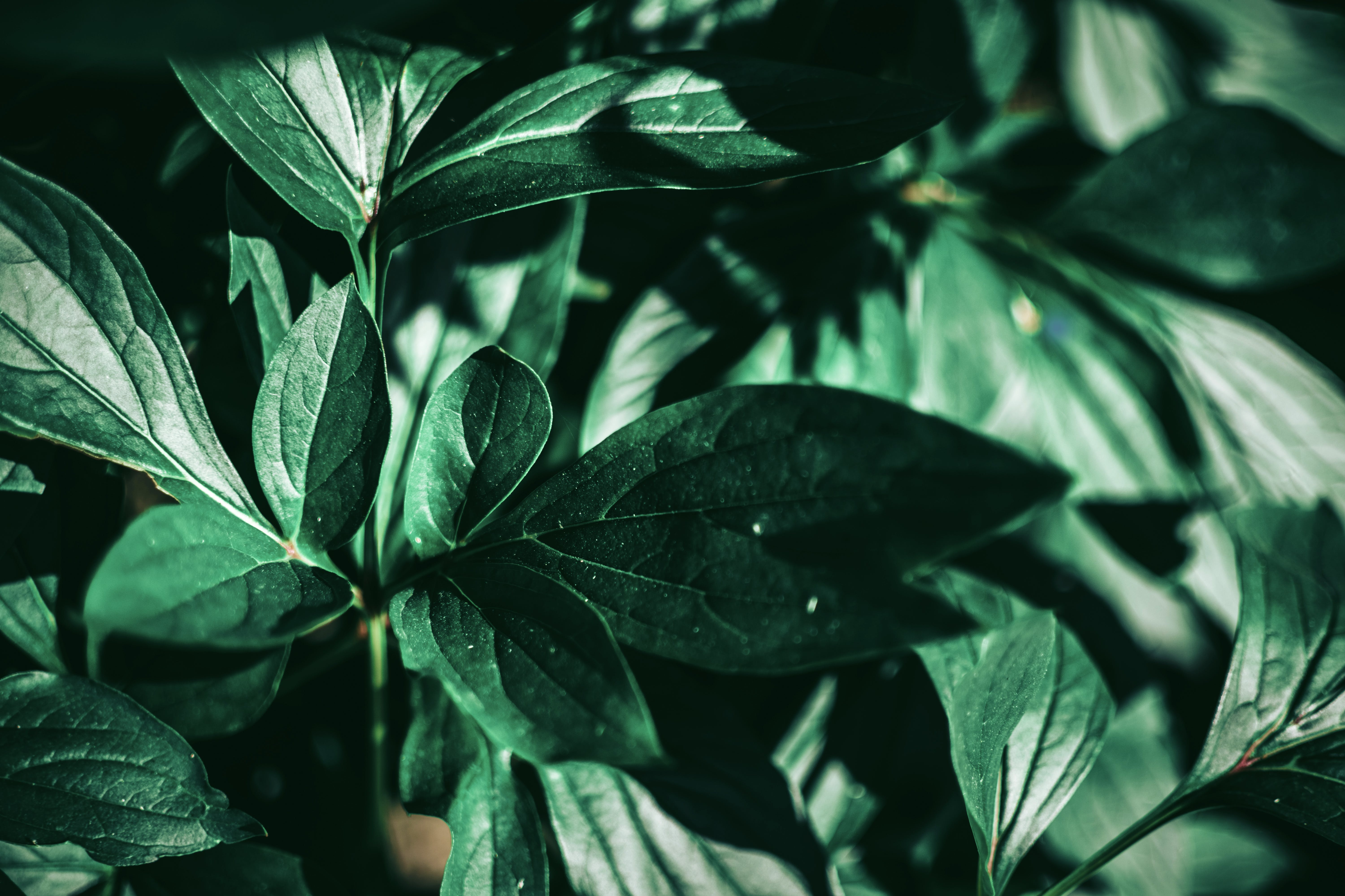 Selective Focus Photo of Green Leafed Plant