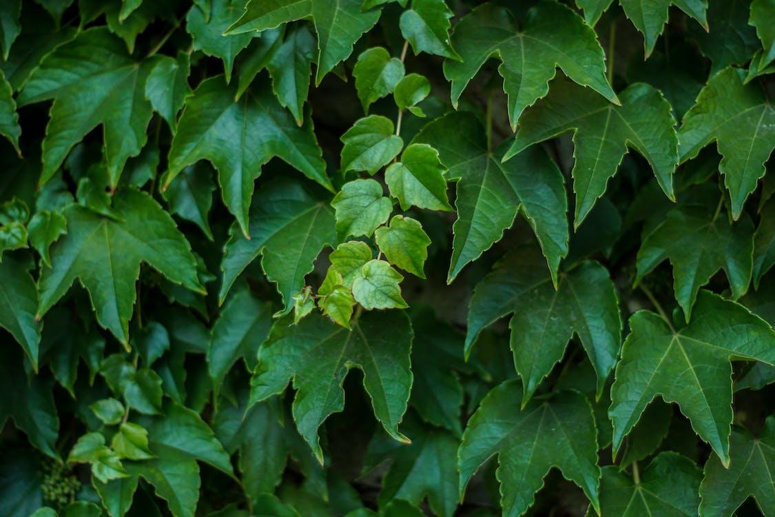 заводы, зеленый, зеленый лист