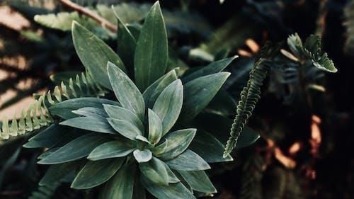 Photos gratuites de agave, centrale, couleur, croissance
