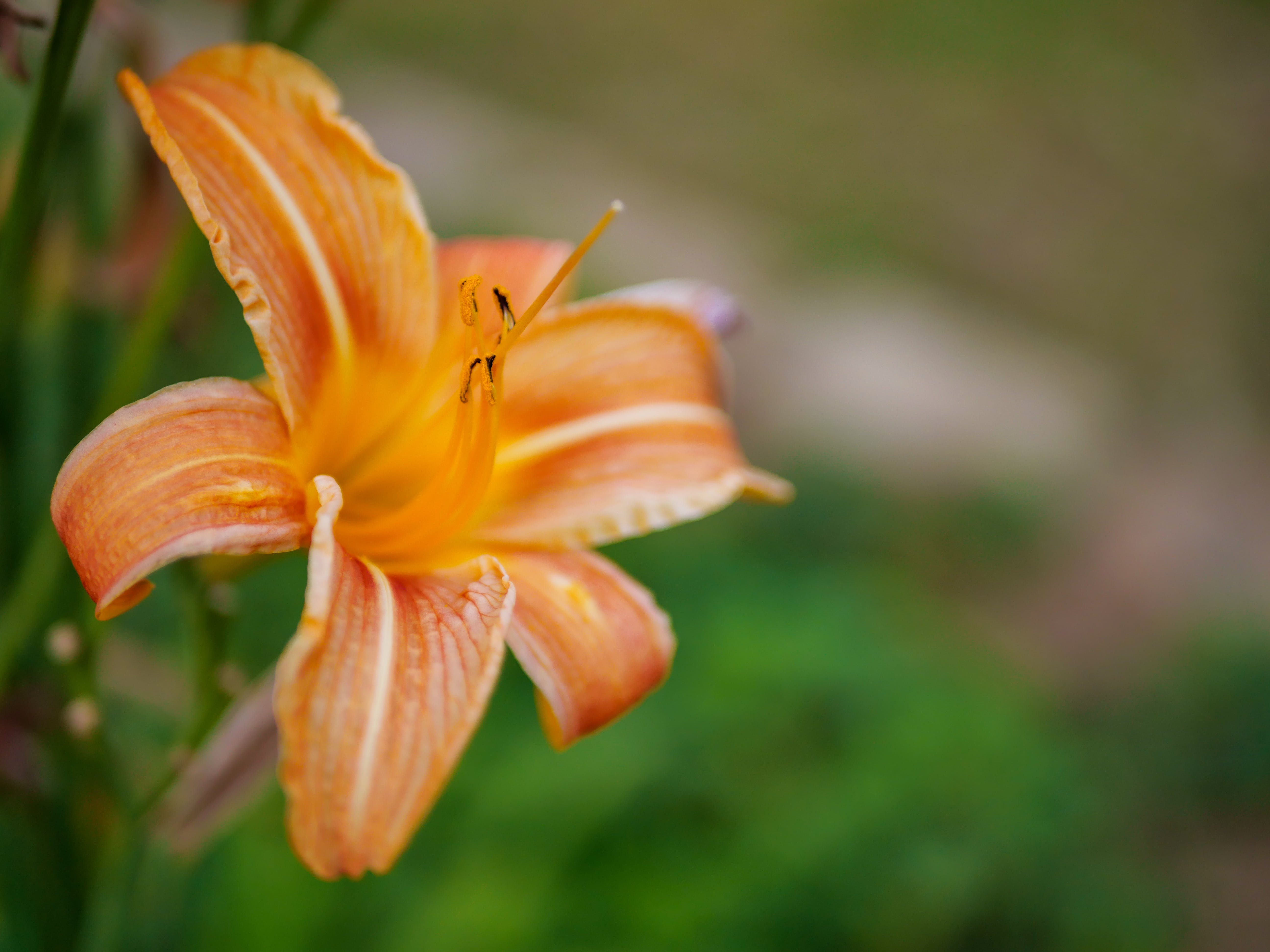 Free stock photo of orange, flower, blossom, detail