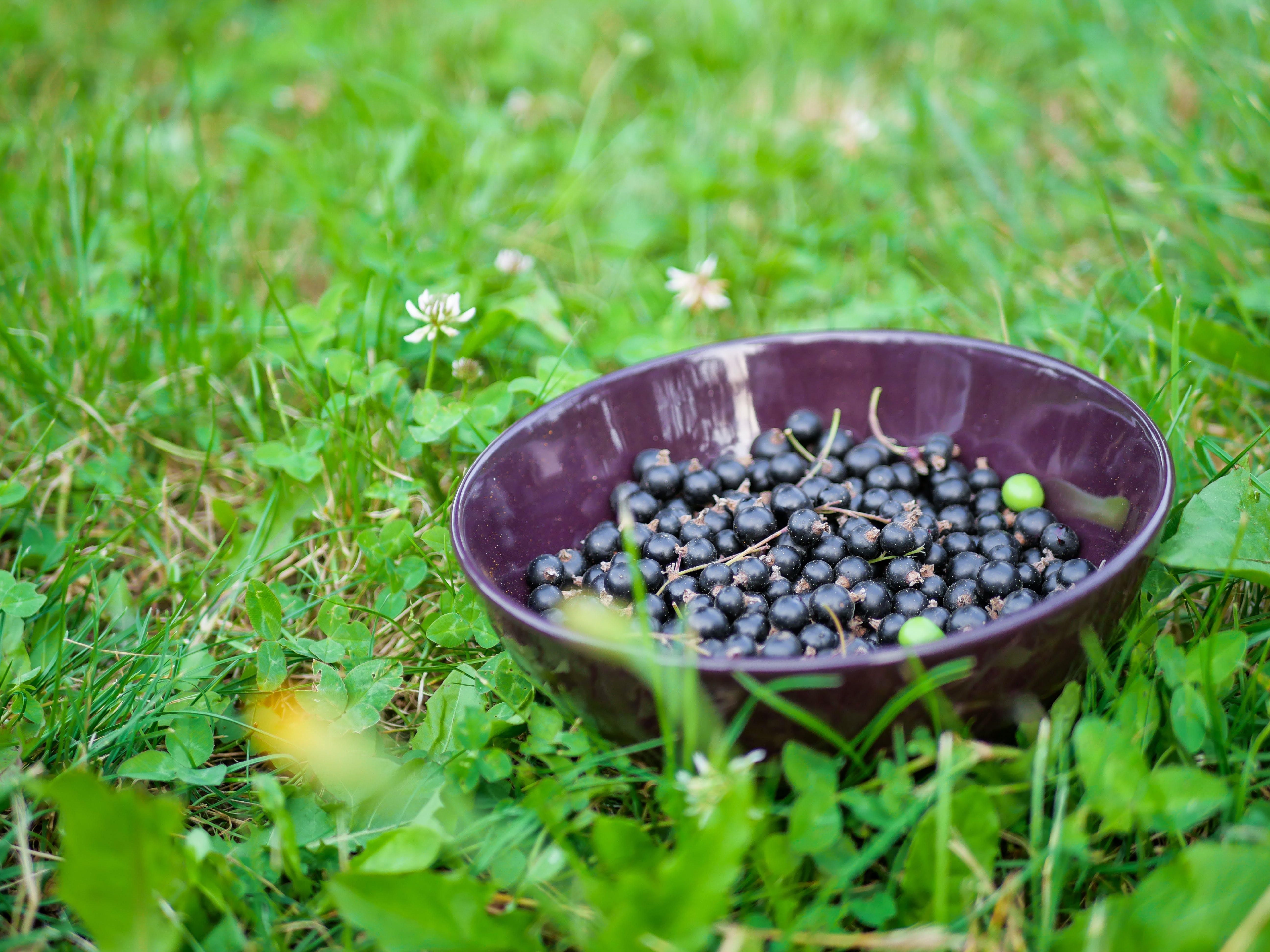 Free stock photo of grass, green, bowl, fruit