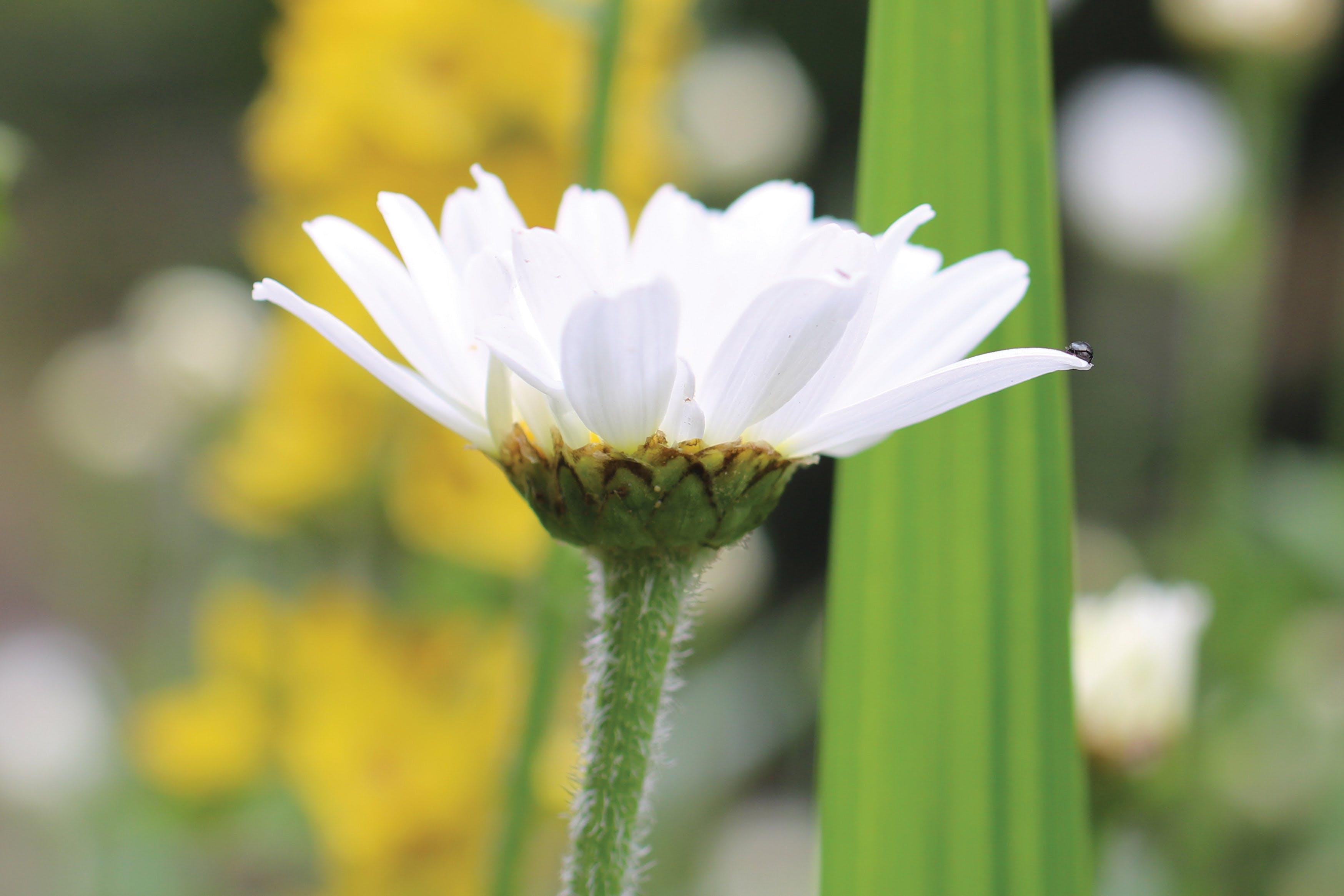 Free stock photo of bug, bug on flower, closeup, closeup flowers
