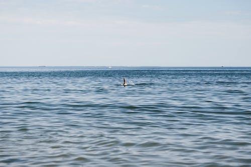 Gratis arkivbilde med bølger, dagtid, hav, himmel
