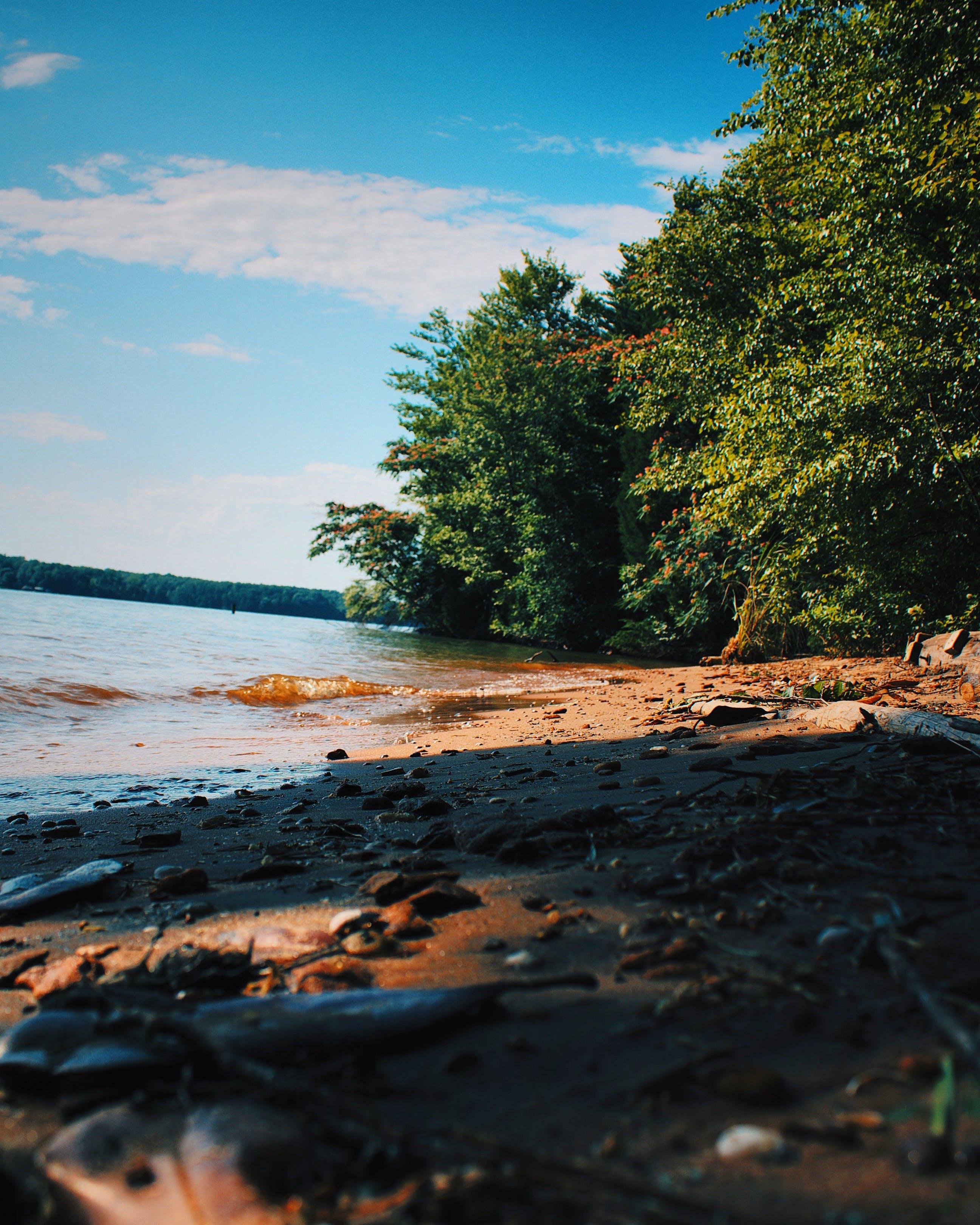 Free stock photo of beach, lake