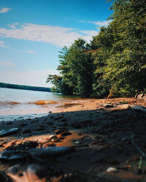 ビーチの無料の写真素材