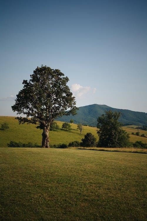 #木, 山の無料の写真素材