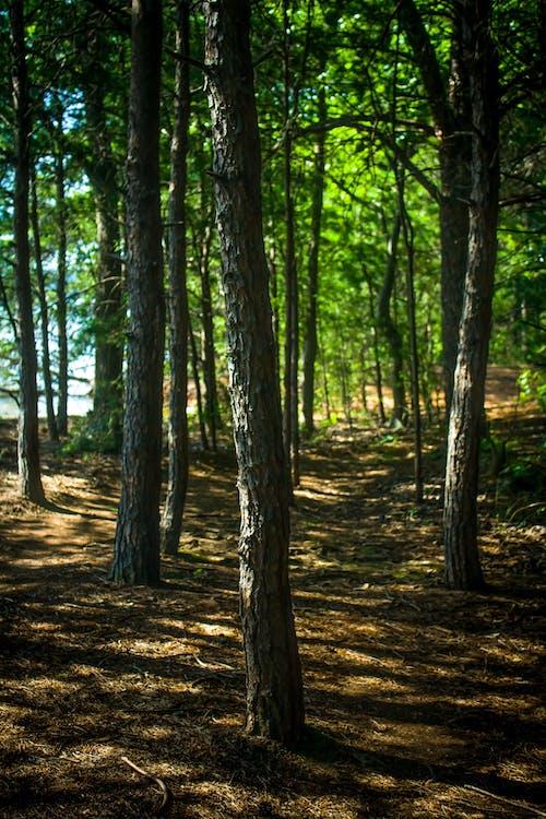 #森林の無料の写真素材