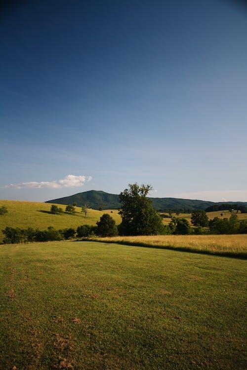 ağaçlar, alan, barışçıl, bulutlar içeren Ücretsiz stok fotoğraf