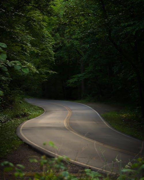 山, 道路の無料の写真素材