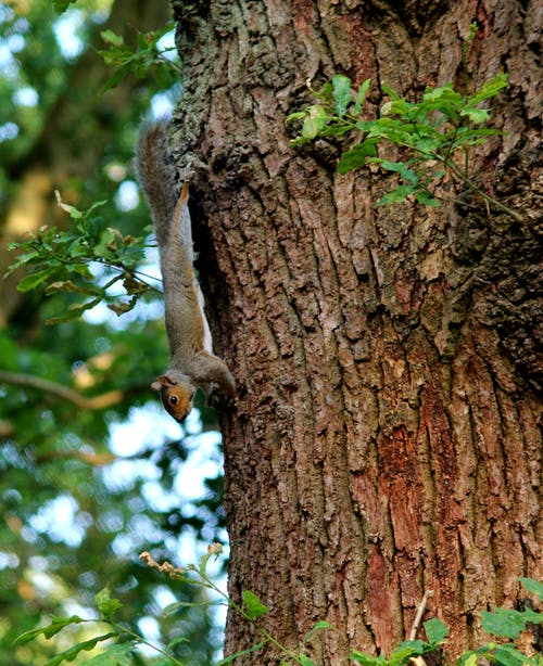 Бесплатное стоковое фото с #squirrel #tree #woods #nature #wildlife