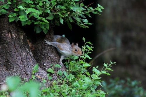 Бесплатное стоковое фото с #squirrel #woods #wildlife #nature
