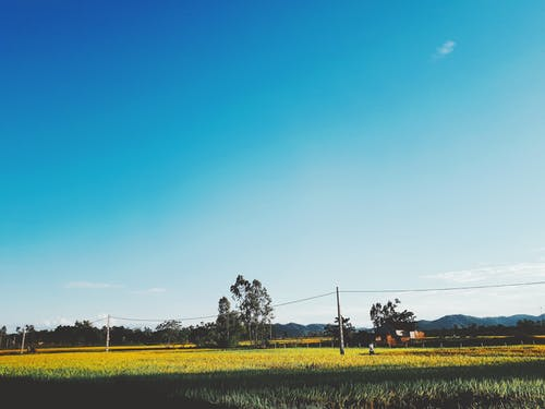 Foto d'estoc gratuïta de arbre, camp d'arròs, cel blau, fotografia de natura
