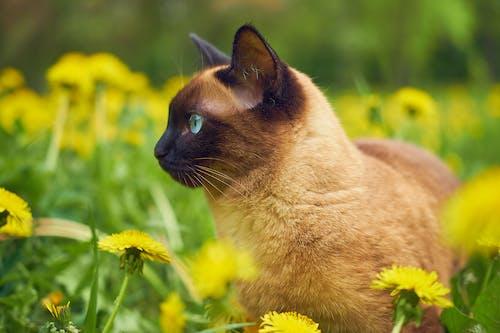 フィールド, フラワーズ, ペット, 動物の無料の写真素材