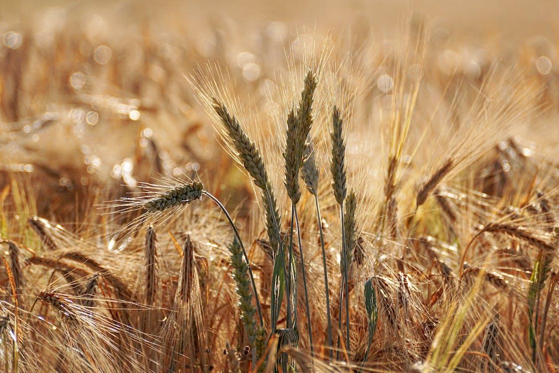 farma, hřiště, orná půda