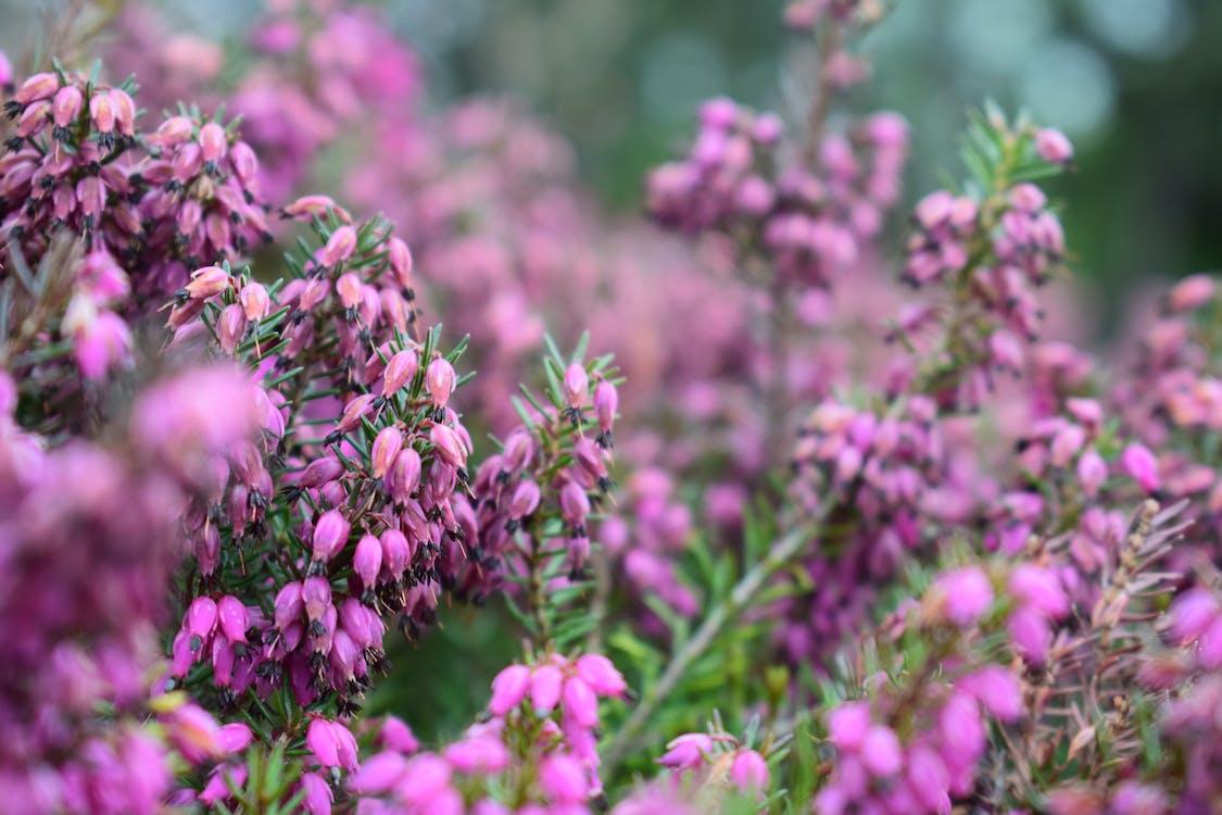 Purple Flowering Plant Photography