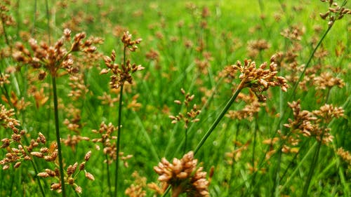 Free stock photo of grassy field