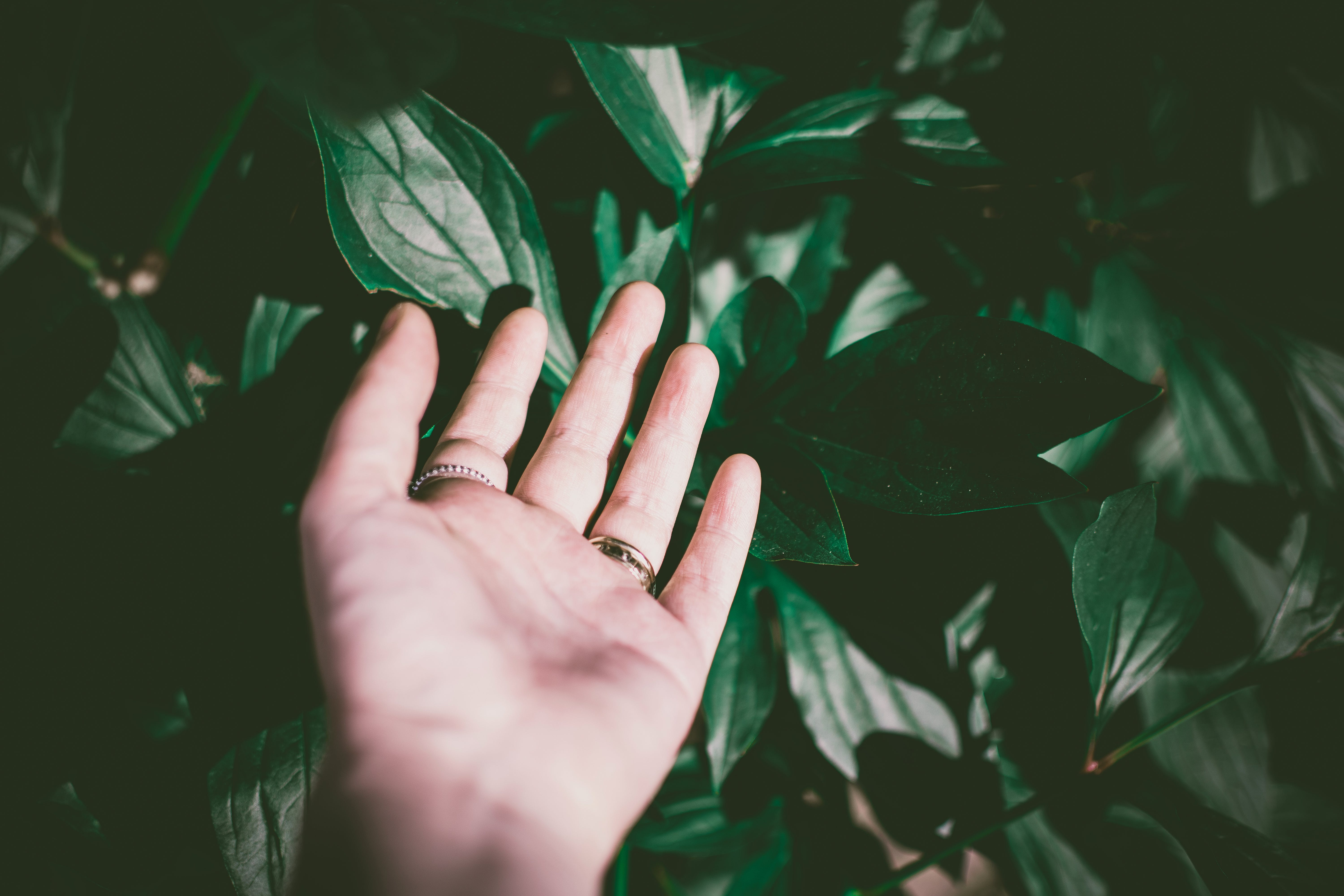Person Wearing Silver-colored Ring Touching Green Leaf