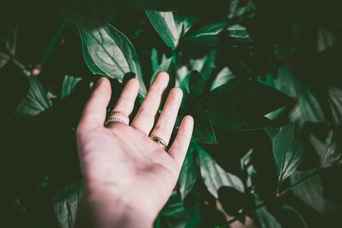 Imagine de stoc gratuită din atingere, creștere, culoare, ecologie