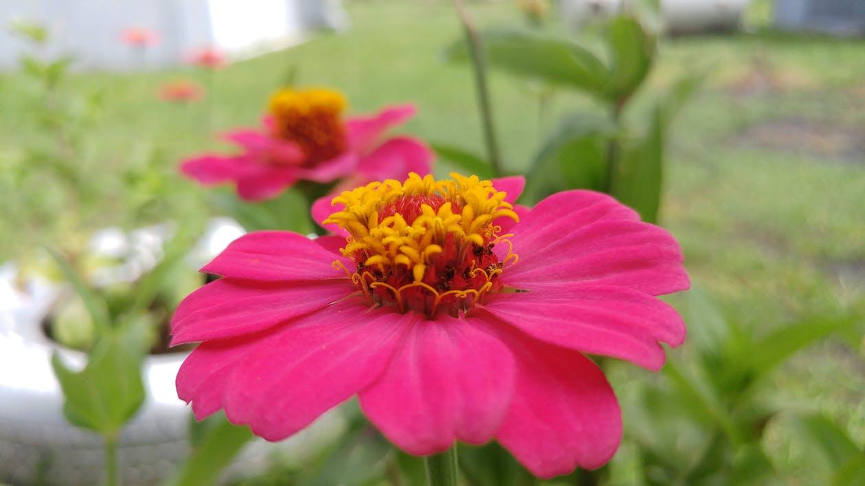 kwiat, pyłek, zielony