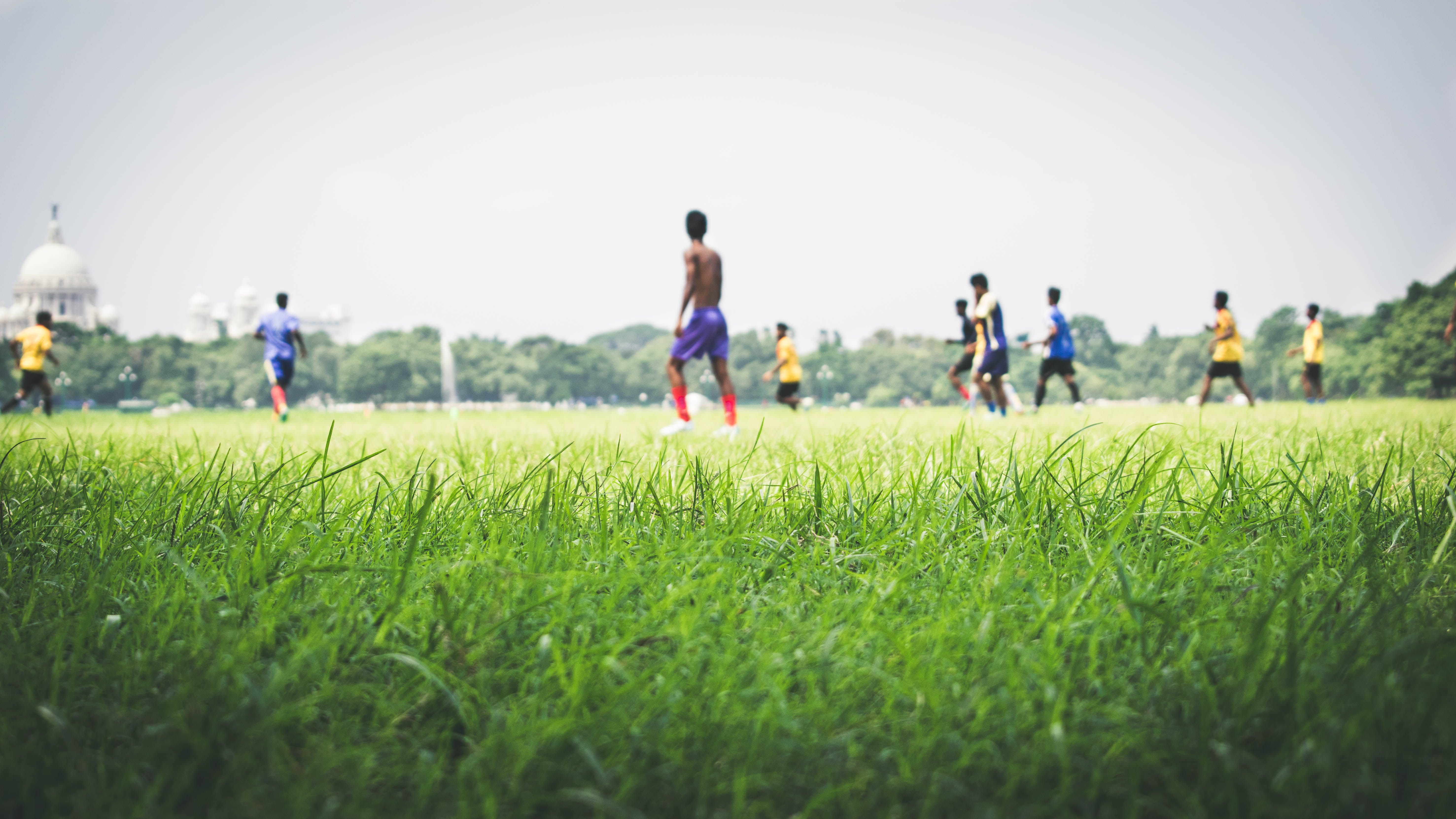 Free stock photo of nature, field, football, nature photography