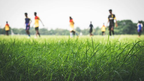 Free stock photo of field, football players, grass